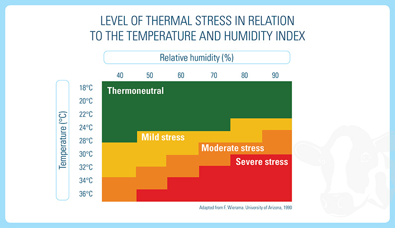 Thermal Stress In Cows