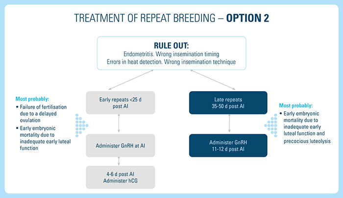 Treatment of Repeat Breeding option 2